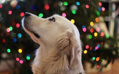 Knallend het nieuwe jaar in… maar niet voor elk huisdier!